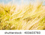 gold wheat ears on the field... | Shutterstock . vector #403603783