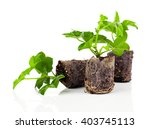 geranium with roots  ready to... | Shutterstock . vector #403745113