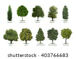 tree types  sorts specimens... | Shutterstock .eps vector #403766683