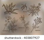 medicinal plants for skin.