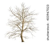 Isolated Tree With No Leaves O...