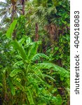 tropical landscape.    Shutterstock . vector #404018083