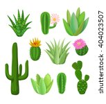 Cacti And Succulents With...