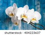 white orchid flower on blue... | Shutterstock . vector #404223637