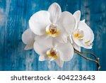 white orchid flower on blue... | Shutterstock . vector #404223643