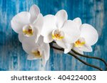 White Orchid Flower On Blue...