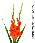 Beautiful Orange Gladiolus...