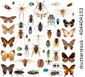 set of insects on white... | Shutterstock . vector #404404153