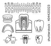 Human Tooth Anatomy. Vector...