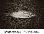 dead fish | Shutterstock . vector #404468053