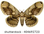 huge philippine brahmin moth ... | Shutterstock . vector #404692723