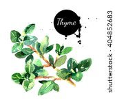 watercolor hand drawn thyme... | Shutterstock . vector #404852683