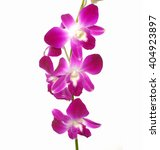 pink orchid isolated on white | Shutterstock . vector #404923897