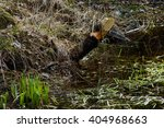 beaver tree | Shutterstock . vector #404968663