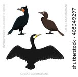 Bird Cormorant Set Cartoon...