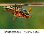 The Great Diving Beetle ...