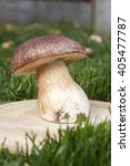Small photo of large white mushroom porcini on a wooden stand in the grass in the sun