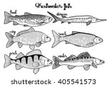 graphic fish collection drawn... | Shutterstock .eps vector #405541573