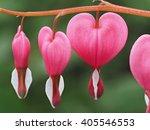 Spring Flowers Series  Bleedin...