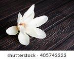 White Magnolia Flower Close Up...
