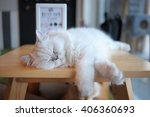 Sleep Cat  Cat Relaxing On...