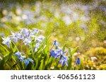 Spring Flowers In Rain