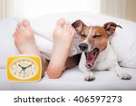 Yawning Dog In Bed With Owner...