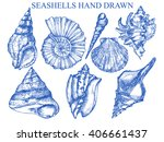 Seashell  Sea Shell  Nature Se...