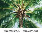 coconuts palm tree perspective... | Shutterstock . vector #406789003