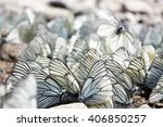 Black And White Butterflies...