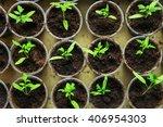 the beautiful little seedlings... | Shutterstock . vector #406954303