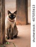 Siamese Cat Thailand Cat Close...