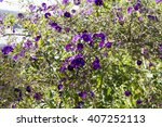 Delicate Deep Purple  Flowers...