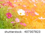 colorful cosmos flower in... | Shutterstock . vector #407307823