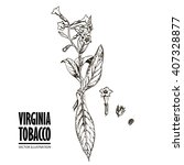 Hand Drawn Tobbaco Virginia...