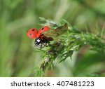 close up of ladybug flying off... | Shutterstock . vector #407481223