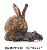 Mother And Children Rabbits On...