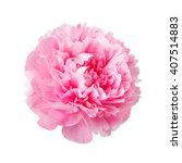 Pink Peony Isolated On White...