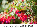Small photo of Green-tailed Sunbird (Aethopyga nipalensis) in doi inthanon national park, ChiangMai, Thailand