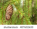 Fir Tree Cone Hanging Against...