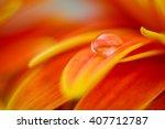 Orange Daisy Colors Refraction...