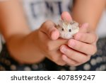 Hamster Hold Hands Girl Held...