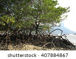 green mangroves growing in... | Shutterstock . vector #407884867