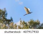 Flying Egret  Egretta Garzetta...