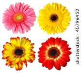 four colorful gerber flowers... | Shutterstock . vector #40796452