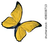 beautiful yellow butterfly... | Shutterstock . vector #408038713
