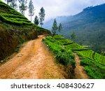 The Hills In Sri Lanka With Te...