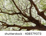 branches of the old claw tree | Shutterstock . vector #408579373