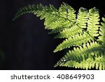 Common Lady Fern Of The Pacifi...