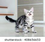 Stock photo cute american shorthair cat kitten 408656653
